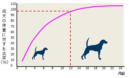 猫 体重 月齢